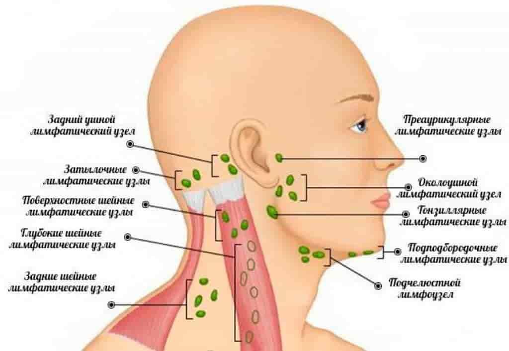 Схема расположение лимфоузлов на лице для определения направления тейпирования